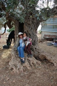 A little Palestinian girl and me cuddled up in a 1000 year old olive tree.